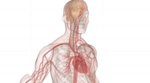 human-physiology-catalog